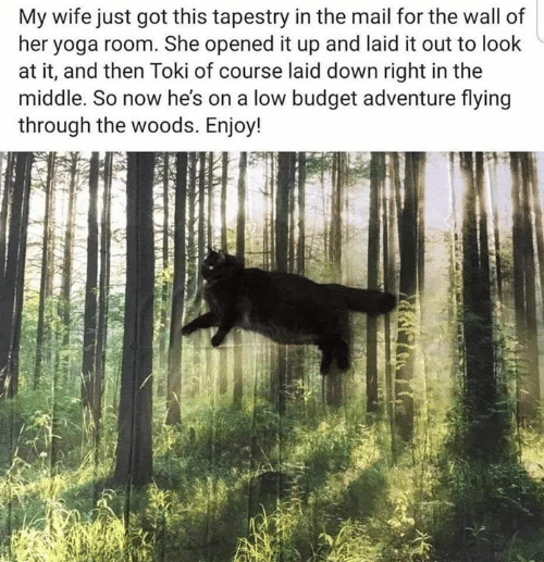 Budget, Mail, and The Middle: My wife just got this tapestry in the mail for the wall of  her yoga room. She opened it up and laid it out to look  at it, and then Toki of course laid down right in the  middle. So now he's on a low budget adventure flying  through the woods. Enjoy!