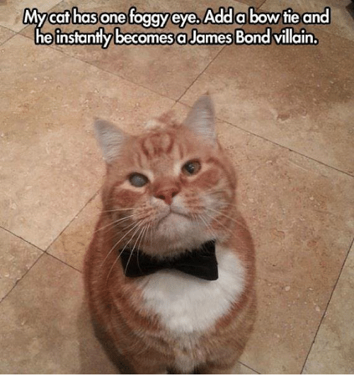 mycat: Mycat has one foggy eye,Adda bowtie and  he instantly becomesa James Bond villain.