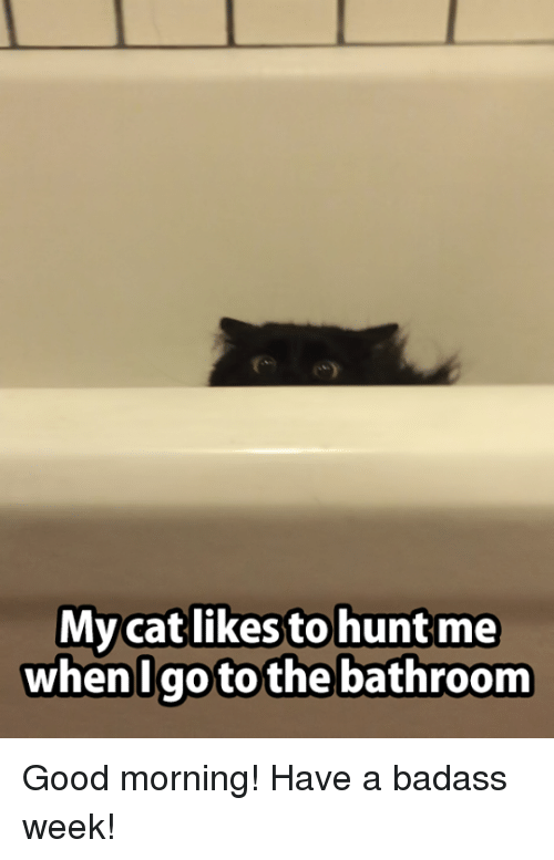 mycat: Mycat likes to huntme  When  Igo to the bathroom Good morning! Have a badass week!