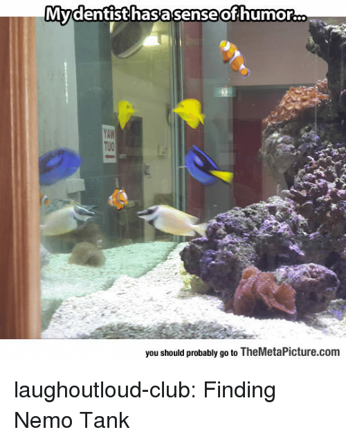 Finding Nemo: Mydentisthasasenseofhumorc.  you should probably go to TheMetaPicture.com laughoutloud-club:  Finding Nemo Tank