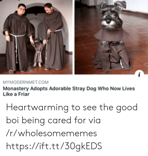 The Good: MYMODERNMET.COM  Monastery Adopts Adorable Stray Dog Who Now Lives  Like a Friar Heartwarming to see the good boi being cared for via /r/wholesomememes https://ift.tt/30gkEDS