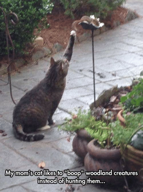 boop: Mymom's cat likes to boop woodland creatures  instead of hunting them...