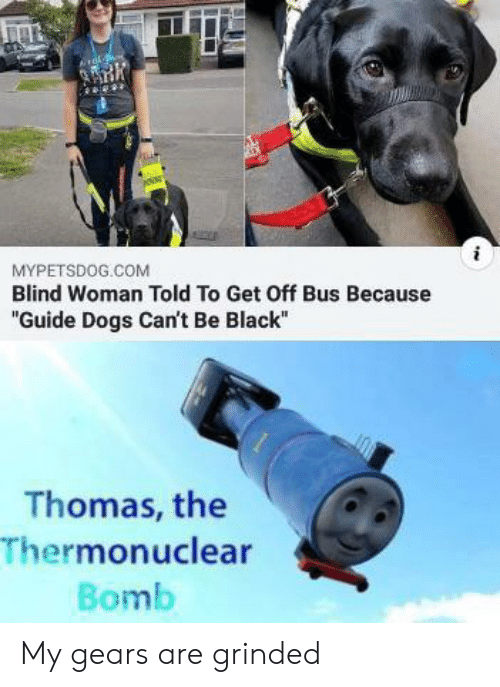 """Dogs, Black, and Thomas: MYPETSDOG.COM  Blind Woman Told To Get Off Bus Because  """"Guide Dogs Can't Be Black""""  Thomas, the  Thermonuclear  Bomb My gears are grinded"""
