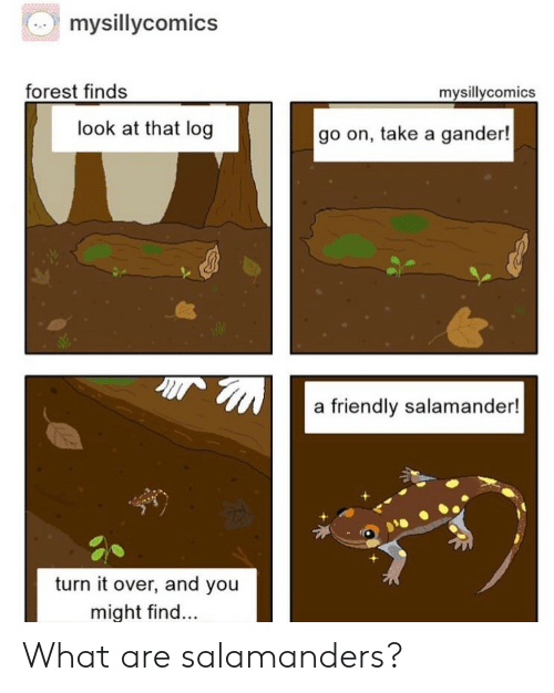 look at that: mysillycomics  forest finds  mysillycomics  look at that log  go on, take a gander!  a friendly salamander!  turn it over, and you  might find... What are salamanders?