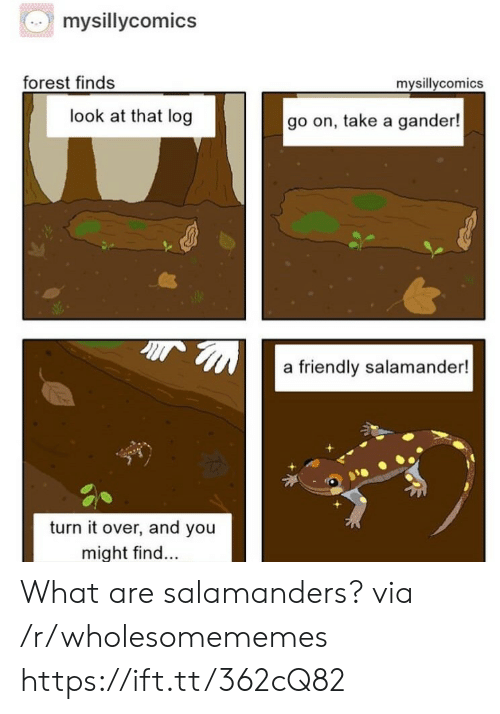 Forest, Log, and Via: mysillycomics  forest finds  mysillycomics  look at that log  go on, take a gander!  a friendly salamander!  turn it over, and you  might find... What are salamanders? via /r/wholesomememes https://ift.tt/362cQ82