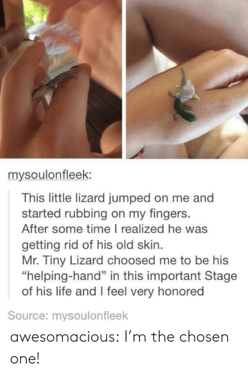 "the chosen one: mysoulonfleek:  This little lizard jumped on me and  started rubbing on my fingers.  After some time I realized he was  getting rid of his old skin  Mr. Tiny Lizard choosed me to be his  ""helping-hand"" in this important Stage  of his life and I feel very honored  Source: mysoulonfleek awesomacious:  I'm the chosen one!"