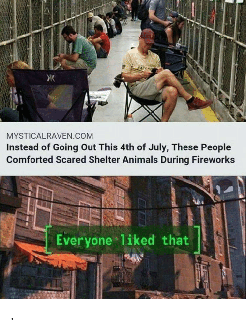 Animals, 4th of July, and Fireworks: MYSTICALRAVEN.COM  Instead of Going Out This 4th of July, These People  Comforted Scared Shelter Animals During Fireworks  Everyone 1iked that .