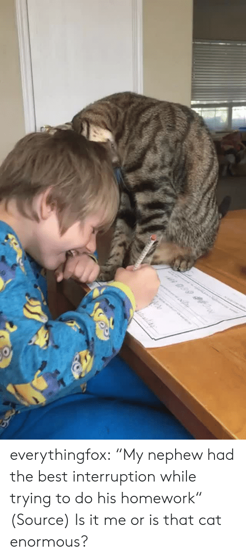 "aww: n 0.99 everythingfox:  ""My nephew had the best interruption while trying to do his homework"" (Source)   Is it me or is that cat enormous?"