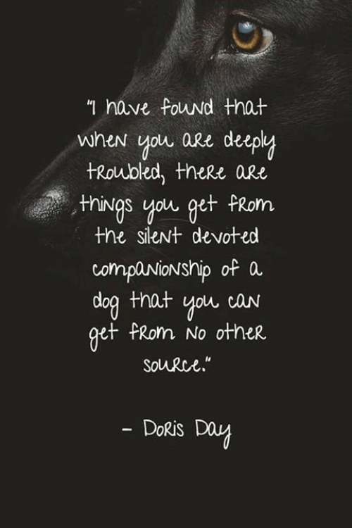 Memes, Companionship, and Doris Day: n have Fouwd that  when you are deep  tRoubled, theRe aRe  nings you get FRom  the sieNt devoted  companionship of a  doa that you caN  et PRom No other  Solurce.  DoRis Day