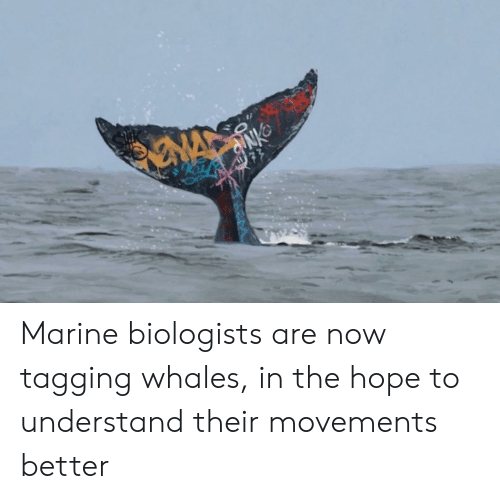 marine: NA  77 Marine biologists are now tagging whales, in the hope to understand their movements better