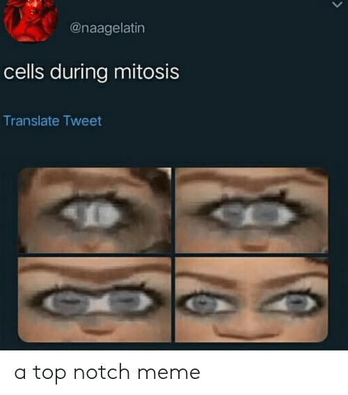mitosis: @naagelatin  cells during mitosis  Translate Tweet a top notch meme