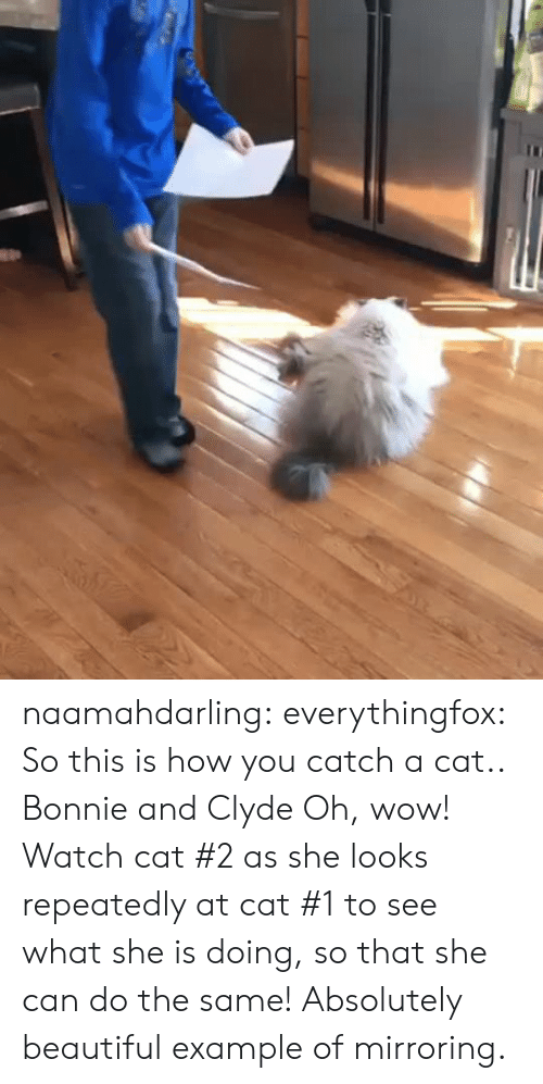 Repeatedly: naamahdarling:  everythingfox:   So this is how you catch a cat..   Bonnie and Clyde   Oh, wow! Watch cat #2 as she looks repeatedly at cat #1 to see what she is doing, so that she can do the same! Absolutely beautiful example of mirroring.