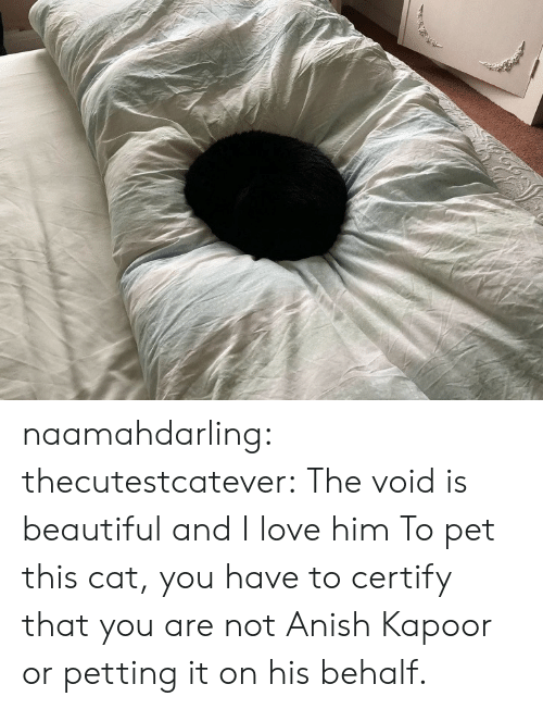 petting: naamahdarling:  thecutestcatever: The void is beautiful and I love him  To pet this cat, you have to certify that you are not Anish Kapoor or petting it on his behalf.