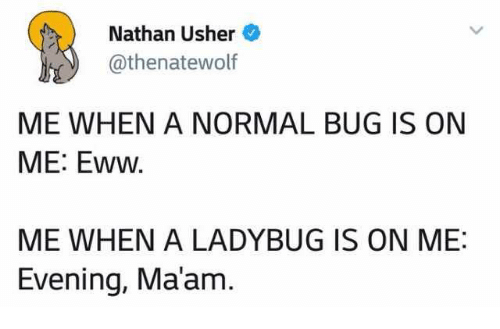 Usher, Bug, and Evening: Nathan Usher  @thenatewolf  ME WHEN A NORMAL BUG IS ON  ME: Eww  ME WHEN A LADYBUG IS ON ME:  Evening, Ma'am