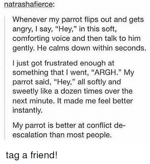 """escalation: natrashafierce:  Whenever my parrot flips out and gets  angry, say, """"Hey,"""" in this soft,  comforting voice and then talk to him  gently. He calms down within seconds.  I just got frustrated enough at  something that I went, """"ARGH."""" My  parrot said, """"Hey,"""" all softly and  sweetly like a dozen times over the  next minute. It made me feel better  instantly.  My parrot is better at conflict de-  escalation than most people. tag a friend!"""