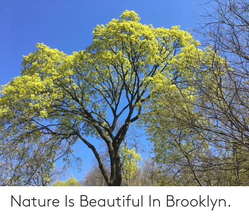 Brooklyn: Nature Is Beautiful In Brooklyn.