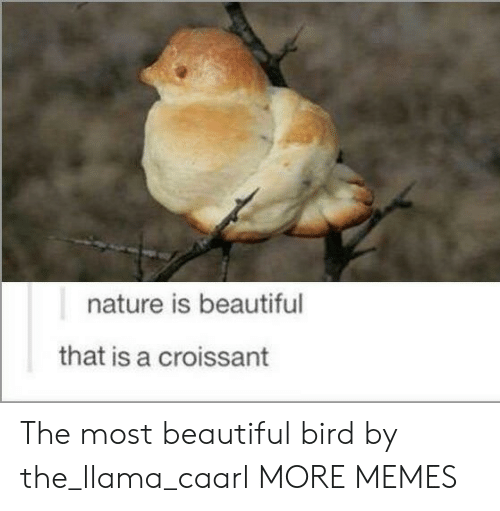 Nature Is Beautiful: nature is beautiful  that is a croissant The most beautiful bird by the_llama_caarl MORE MEMES