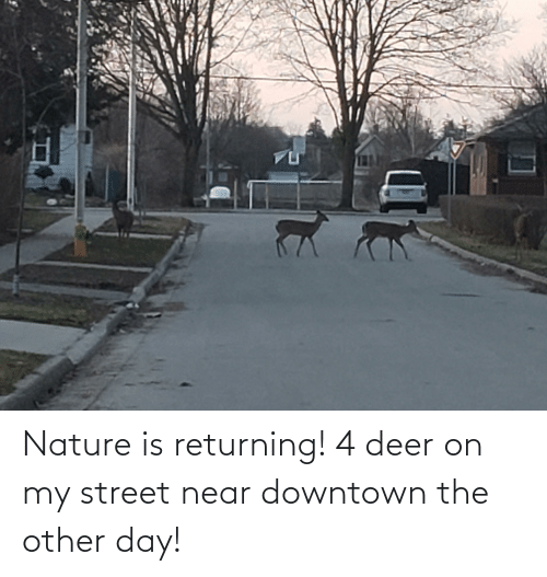 Deer: Nature is returning! 4 deer on my street near downtown the other day!
