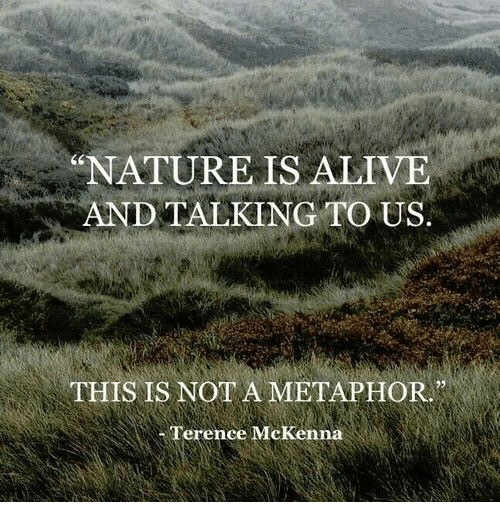 "Metaphor: ""NATUREIS ALIVE  AND TALKING TO US.  (C  THIS IS NOT A METAPHOR  Terence McKenna"