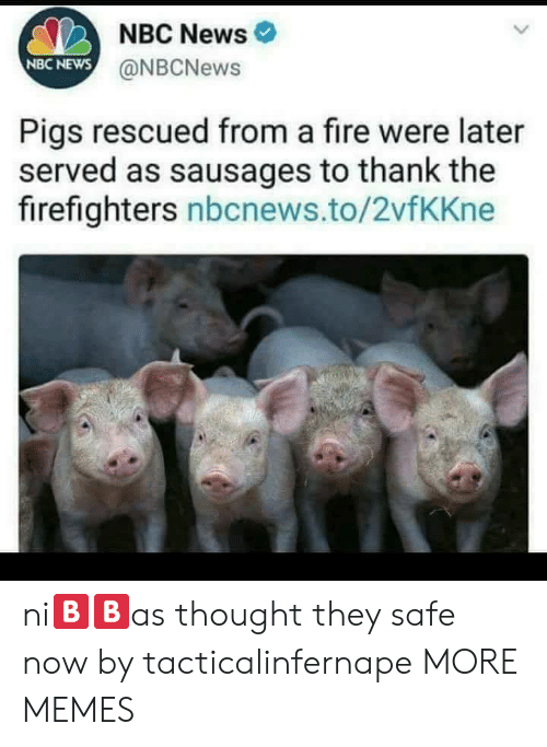 Dank, Fire, and Memes: NBC News  NBC NEWS  @NBCNews  Pigs rescued from a fire were later  served as sausages to thank the  firefighters nbcnews.to/2vfKKne ni🅱🅱as thought they safe now by tacticalinfernape MORE MEMES