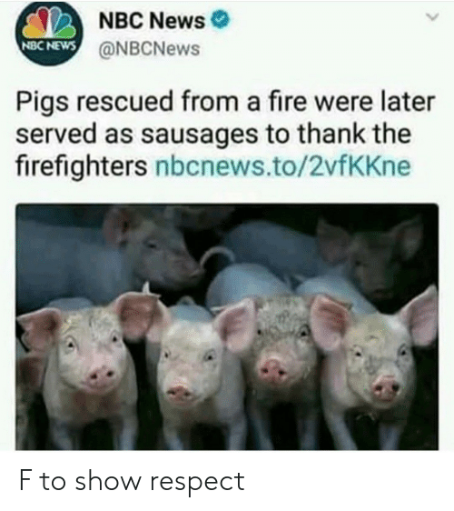 sausages: NBC News  @NBCNews  NBC NEWS  Pigs rescued from a fire were later  served as sausages to thank the  firefighters nbcnews.to/2vfKKne F to show respect