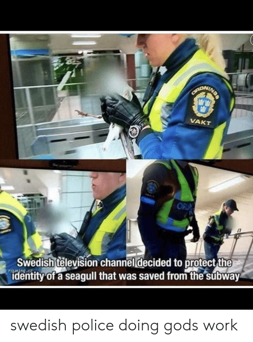 subway: NDA  CANONINE  VAKT  OR  Swedish television channel decided to protect the  identity of a seagull that was saved from the subway swedish police doing gods work