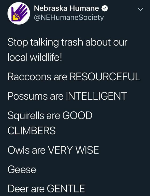 Deer, Trash, and Good: Nebraska Humane  @NEHumaneSociety  Stop talking trash about our  local wildlife!  Raccoons are RESOURCEFUL  Possums are INTELLIGENT  Squirells are GOOD  CLIMBERS  Owls are VERY WISE  Geese  Deer are GENTLE