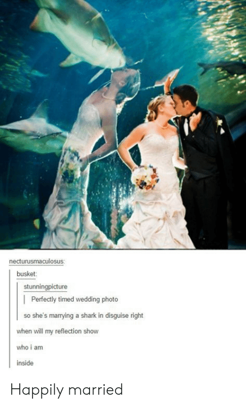 happily married: necturusmaculosus  busket  stunningpicture  | Perfectly timed wedding photo  so she's marrying a shark in disguise right  when will my reflection show  who i am  inside Happily married