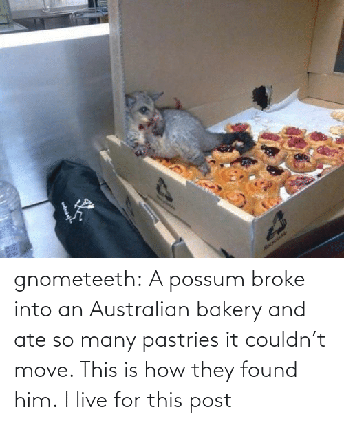 Pastries: Necylebia  RecrdaNe gnometeeth:   A possum broke into an Australian bakery and ate so many pastries it couldn't move. This is how they found him.  I live for this post