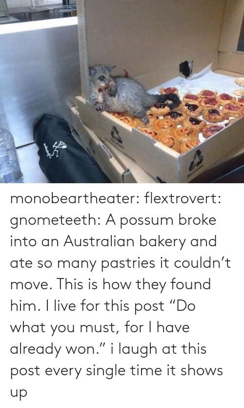 """Pastries: Necylebia  RecrdaNe monobeartheater:  flextrovert:  gnometeeth:   A possum broke into an Australian bakery and ate so many pastries it couldn't move. This is how they found him.  I live for this post  """"Do what you must, for I have already won.""""   i laugh at this post every single time it shows up"""