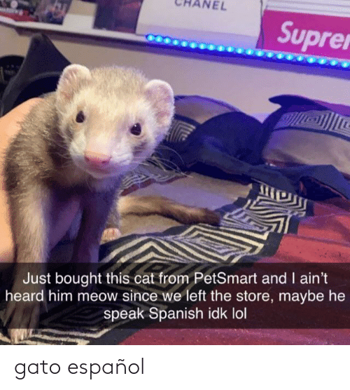 Spanish: NEL  Suprer  Just bought this cat from PetSmart and I ain't  heard him meow since we left the store, maybe he  speak Spanish idk lol gato español