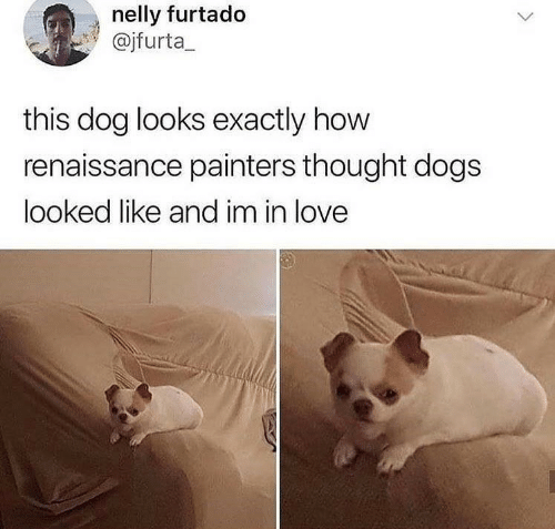 renaissance: nelly furtado  @jfurta  this dog looks exactly how  renaissance painters thought dogs  looked like and im in love