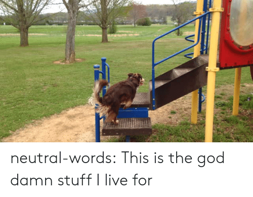 God, Target, and Tumblr: neutral-words:  This is the god damn stuff I live for