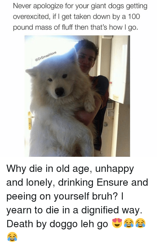yearn: Never apologize for your giant dogs getting  overexcited, if l get taken down by a 100  pound mass of fluff then that's how go.  Ne  @Dr Why die in old age, unhappy and lonely, drinking Ensure and peeing on yourself bruh? I yearn to die in a dignified way. Death by doggo leh go 😍😂😂😂