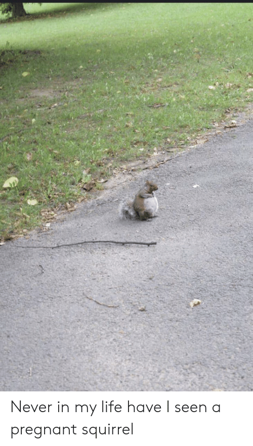 Life, Pregnant, and Squirrel: Never in my life have I seen a pregnant squirrel