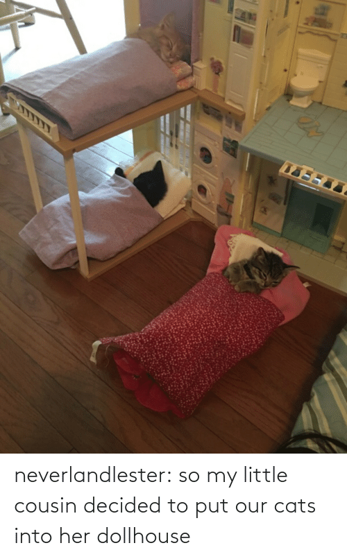 Cats: neverlandlester:  so my little cousin decided to put our cats into her dollhouse