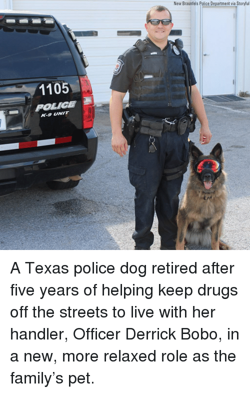 Drugs, Family, and Memes: New Braunfels Police Department via Storyful  BOB0  1105  R-9 NIT A Texas police dog retired after five years of helping keep drugs off the streets to live with her handler, Officer Derrick Bobo, in a new, more relaxed role as the family's pet.