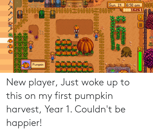 Pumpkin: New player, Just woke up to this on my first pumpkin harvest, Year 1. Couldn't be happier!