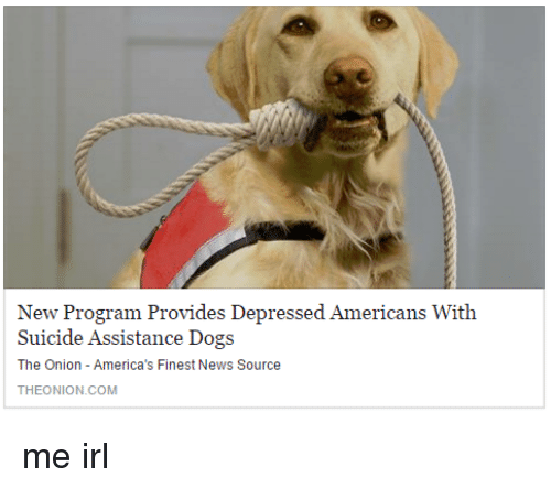 Dogs, News, and The Onion: New Program Provides Depressed Americans With  Suicide Assistance Dogs  The Onion - America's Finest News Source  THEONION.COM me irl