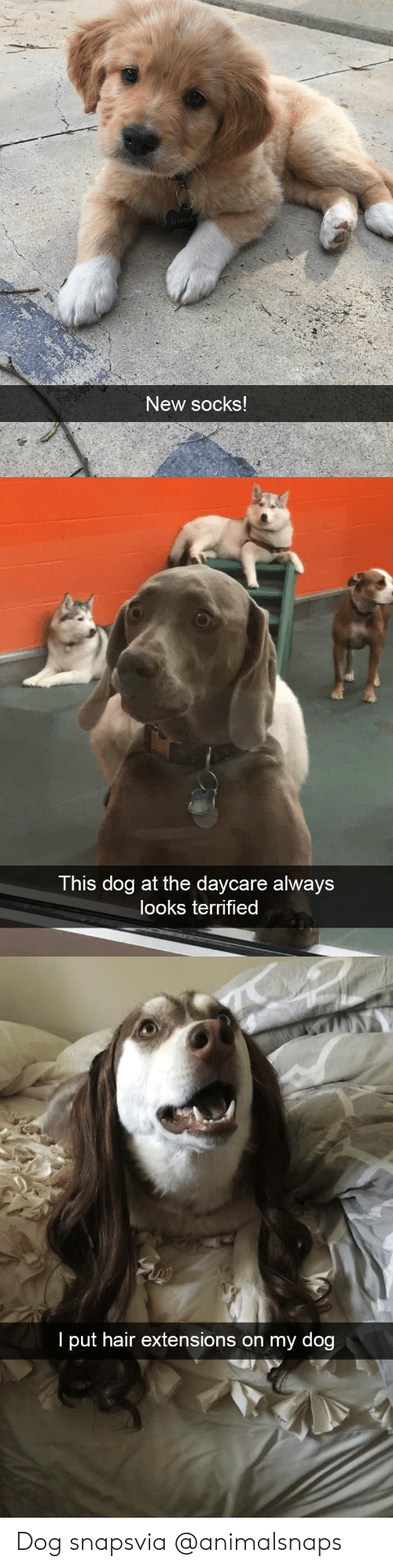 extensions: New socks   This dog at the daycare always  looks terrified   I put hair extensions on my dog Dog snapsvia @animalsnaps