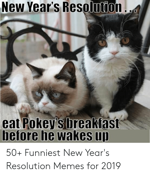 Resolution Memes: New Year's Resoli ition .  eat Pokey's breakfast  before he wakes u 50+ Funniest New Year's Resolution Memes for 2019