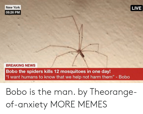 "Spiders: New York  LIVE  08:26 PM  BREAKING NEWS  Bobo the spiders kills 12 mosquitoes in one day!  ""I want humans to know that we help not harm them"" Bobo Bobo is the man. by Theorange-of-anxiety MORE MEMES"