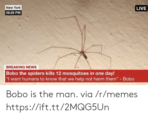 "Spiders: New York  LIVE  08:26 PM  BREAKING NEWS  Bobo the spiders kills 12 mosquitoes in one day!  ""I want humans to know that we help not harm them"" Bobo Bobo is the man. via /r/memes https://ift.tt/2MQG5Un"