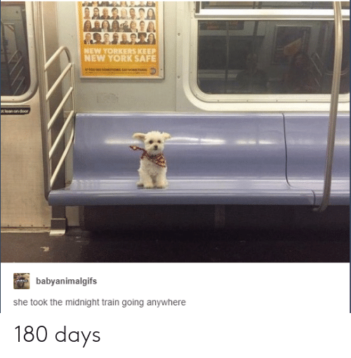 New York, Train, and Midnight: NEW YORKERS KEEP  NEW YORK SAFE  babyanimalgifs  she took the midnight train going anywhere 180 days