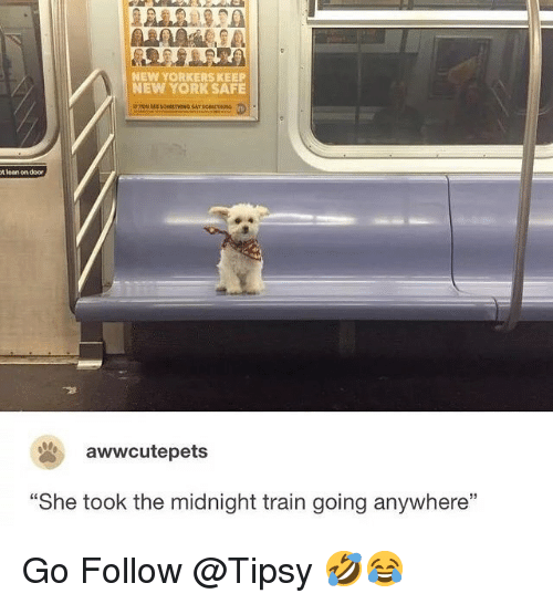 "Lean, Memes, and New York: NEW YORKERS KEEP  NEW YORK SAFE  t lean on door  awwcutepets  ""She took the midnight train going anywhere"" Go Follow @Tipsy 🤣😂"