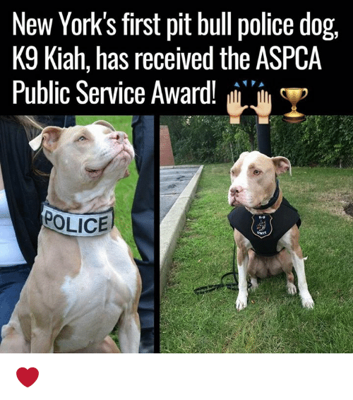 ✅ 25+ Best Memes About Police Dogs | Police Dogs Memes