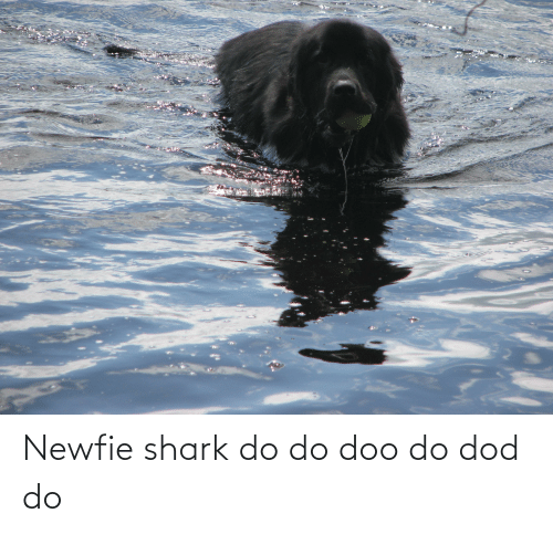 dod: Newfie shark do do doo do dod do