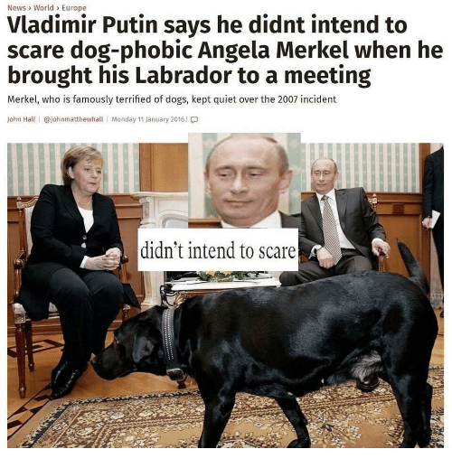 merkel: News> World> Europe  Vladimir Putin says he didnt intend to  scare dog-phobic Angela Merkel when he  brought his Labrador to a meeting  Merkel, who is famously terrified of dogs, kept quiet over the 2007 incident  John Hall | @johnmatthewhall | Monday 11 January 2016 | โ.]  didn't intend to scare