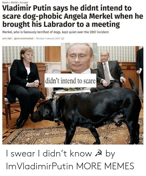 merkel: News> World> Europe  Vladimir Putin says he didnt intend to  scare dog-phobic Angela Merkel when he  brought his Labrador to a meeting  Merkel, who is famously terrified of dogs, kept quiet over the 2007 incident  John Hall | @johnmatthewhall | Monday 11 January 2016 | โ.]  didn't intend to scare I swear I didn't know ☭ by ImVladimirPutin MORE MEMES