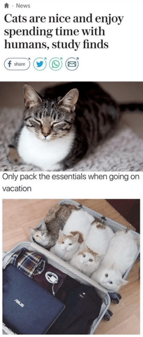 essentials: News  Cats are nice and enjoy  spending time witlh  humans, study finds  share   Only pack the essentials when going on  vacation